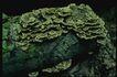 野生蘑菇0068,野生蘑菇,植物,