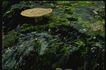 野生蘑菇0069,野生蘑菇,植物,