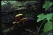 野生蘑菇0073,野生蘑菇,植物,叶底 菌盖 肥大