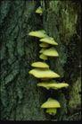 野生蘑菇0077,野生蘑菇,植物,层次 淡绿 繁殖