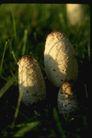 野生蘑菇0078,野生蘑菇,植物,阳光 照射 野生菇