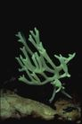 野生蘑菇0083,野生蘑菇,植物,野生 生长 郊外