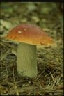 野生蘑菇0084,野生蘑菇,植物,蘑菇 形状 外观