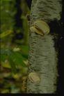 野生蘑菇0086,野生蘑菇,植物,野生 原始 蘑菇