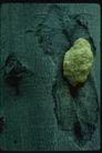 野生蘑菇0089,野生蘑菇,植物,