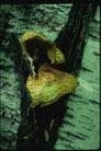 野生蘑菇0090,野生蘑菇,植物,
