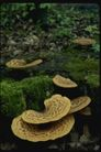 野生蘑菇0096,野生蘑菇,植物,蘑菇 植物 生命