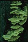 野生蘑菇0099,野生蘑菇,植物,树干 长出 菌类