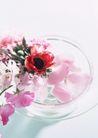 生活小景0153,生活小景,生活,花瓣儿 粉色的花儿