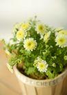 生活小景0154,生活小景,生活,小花朵