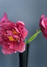 生活小景0165,生活小景,生活,红花