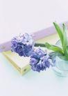 生活小景0180,生活小景,生活,文件夹 玻璃杯 紫色花束