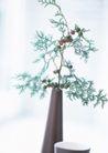 生活小景0187,生活小景,生活,花卉小景 盆栽 装饰物