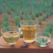 花草茶饮0071,花草茶饮,生活,玻璃杯 茶水 浓黄