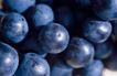 葡萄酒0016,葡萄酒,生活,密集 结满 拥挤