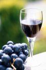 葡萄酒0038,葡萄酒,生活,果串 葡萄串 紫色水果