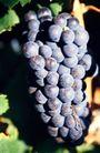 葡萄酒0044,葡萄酒,生活,
