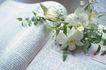 商业图片0010,商业图片,商业情景,书刊 花朵 展开 清香 知识