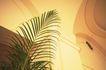 商业图片0013,商业图片,商业情景,吊顶 植物 装潢 豪华 装饰