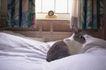 商业图片0024,商业图片,商业情景,宠物 兔子 床单