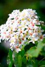 白色纯净花