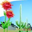 国家与鲜花0005,国家与鲜花,分层花纹,墨西哥 西班牙语 仙人掌 沙漠 美洲大陆