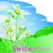 国家与鲜花0014,国家与鲜花,分层花纹,绿色 原野 野花