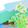 国家与鲜花0019,国家与鲜花,分层花纹,澳大利亚 风情 秀美