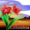 国家与鲜花0032,国家与鲜花,分层花纹,Colombia 野外 景物