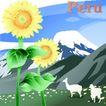 国家与鲜花0038,国家与鲜花,分层花纹,Peru 羊 向日葵