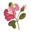 小花纹系列0040,小花纹系列,分层花纹,青叶 淡花 开放