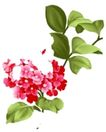 小花纹系列0045,小花纹系列,分层花纹,枝叶 开花 满枝