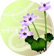 矢量花卉0034,矢量花卉,分层花纹,紫色 荷花 漂浮