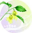 矢量花卉0035,矢量花卉,分层花纹,垂挂 叶片 陪衬