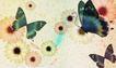 花卉0001,花卉,分层花纹,蝴蝶 飞舞 传粉