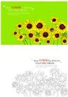 花卉0010,花卉,分层花纹,向日葵 拥簇 向阳