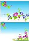 花卉0013,花卉,分层花纹,水面 喇叭花 盛开