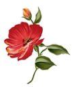 花纹边框0241,花纹边框,分层花纹,一枝 不同 花蕾