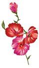 花纹边框0242,花纹边框,分层花纹,四朵 有红有紫 鲜花