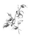花纹边框0265,花纹边框,分层花纹,