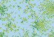 视觉花纹设计0099,视觉花纹设计,分层花纹,碎花 漫天 飘舞