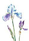 视觉花纹设计0124,视觉花纹设计,分层花纹,