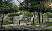 中国计量学院0001,中国计量学院,国内建筑设计案例,公园 树林 林荫道