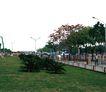 广场绿化环境设计0116,广场绿化环境设计,国内建筑设计案例,
