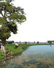 广场绿化环境设计0129,广场绿化环境设计,国内建筑设计案例,