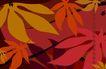 最佳设计背景PSD20013,最佳设计背景PSD2,创意背景,枫叶 秋天 枯黄 暖色 大小