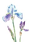 PSD花纹30054,PSD花纹3,花纹图案,花色 形态 朴实