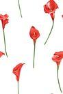 PSD花纹30056,PSD花纹3,花纹图案,红色 独枝 花朵