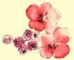 PSD花纹30106,PSD花纹3,花纹图案,淡红 水彩 花作