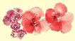 PSD花纹30108,PSD花纹3,花纹图案,摘下 两朵 红花